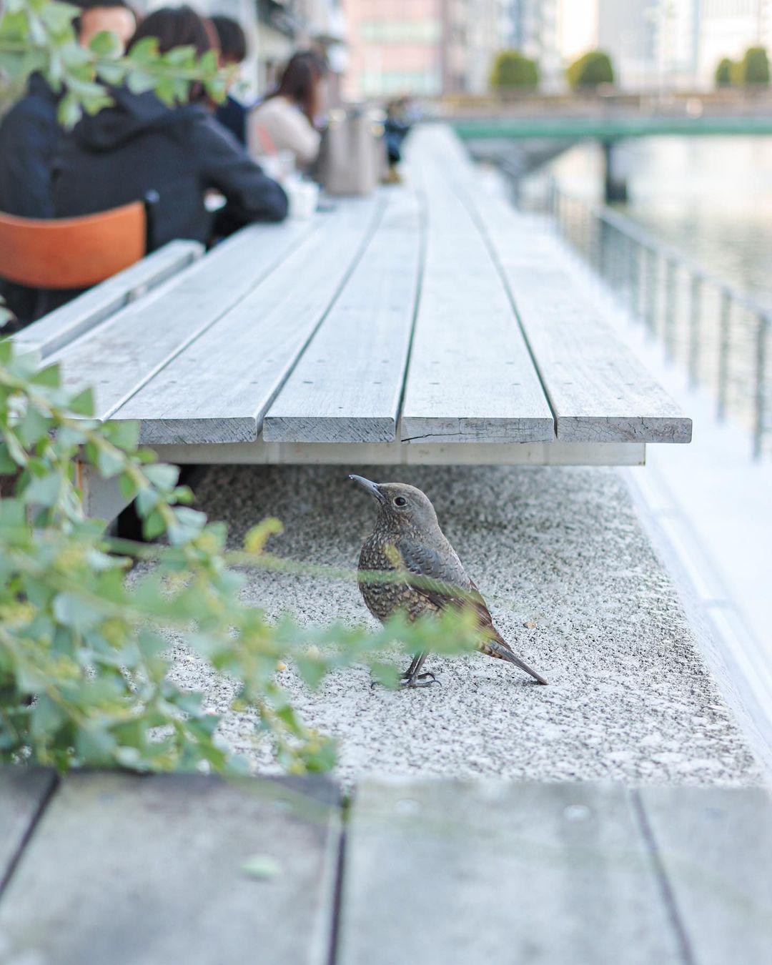 作品名:おこぼれ待ち / 撮影場所:中之島川沿いカフェ / 撮影者:seawest0806さん