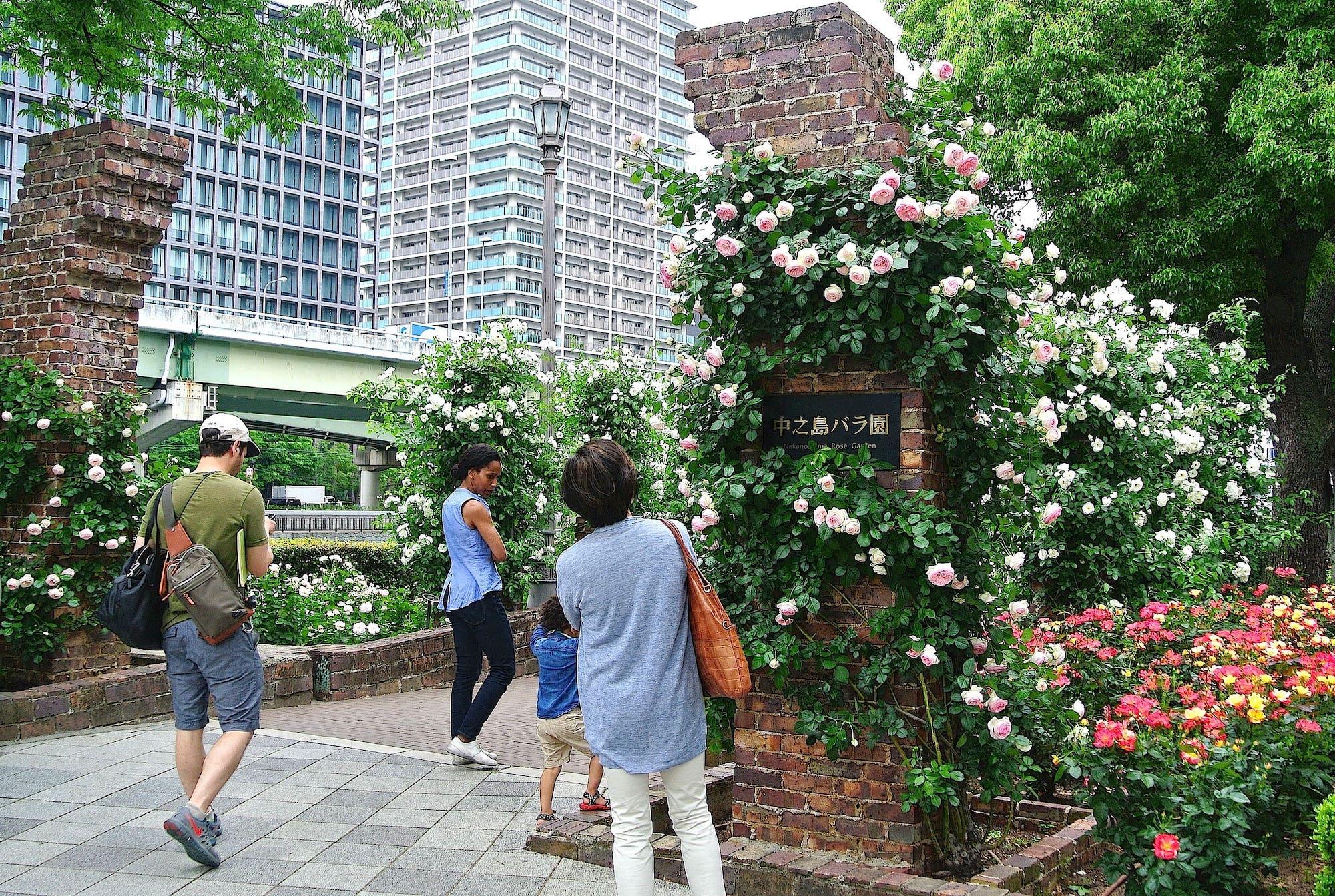 高層ビルや高速道路の高架と、しっくりと調和しているのが、中之島バラ園の魅力のひとつ。★